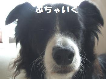 22080624dog 041