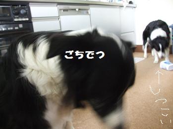 22080624dog 022