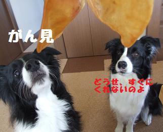 dog20080701 002
