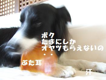 dog20080701 004