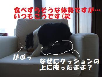 dog20080701 005
