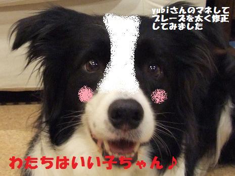 dog20080703 002