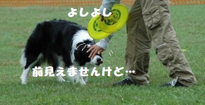 DSC_2342-1.jpg