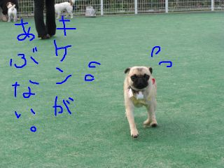20080811i.jpg