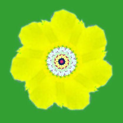むくげの花・イラスト万華鏡587