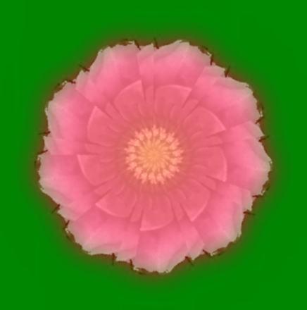 薔薇の花/イラスト万華鏡613