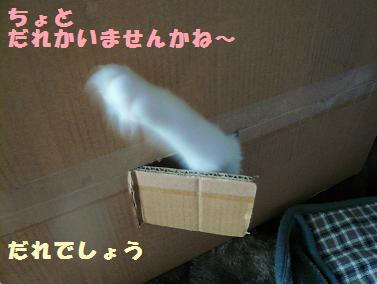 P1020696.jpg