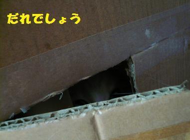 P1020698.jpg
