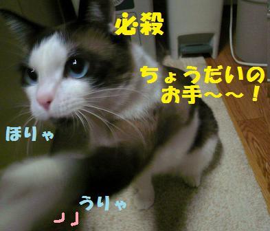 P1020779.jpg