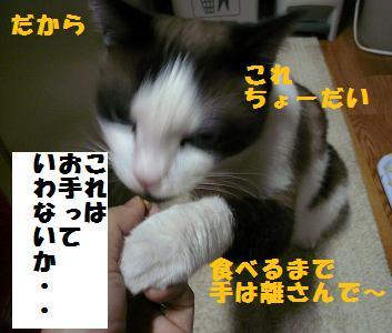 P1020783.jpg