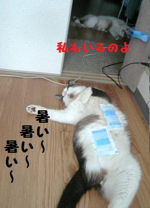 P1030723.jpg