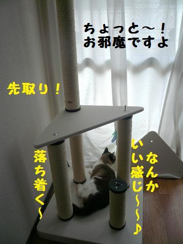 P1030773.jpg
