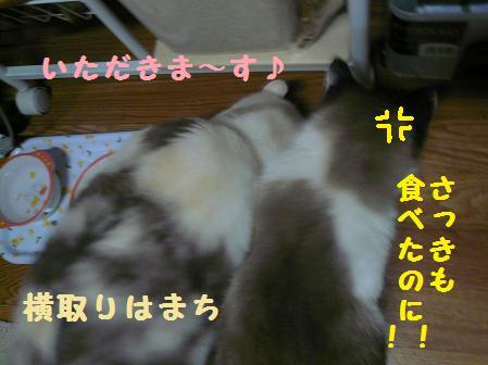 P1040111.jpg