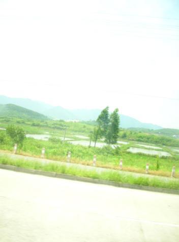 qingdan