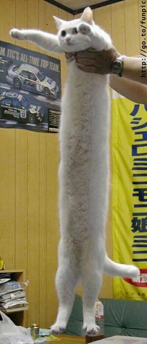 ぬこ-022