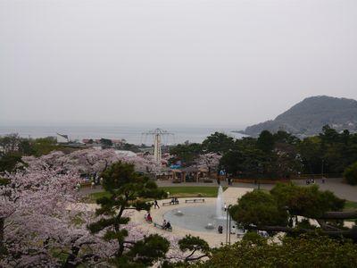 函館公園の桜と立待岬