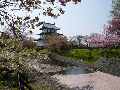 松前城と桜