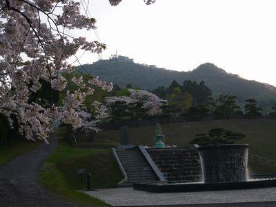配水場の桜