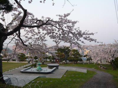配水場の桜‐2