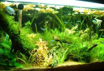 熱帯魚全盛期