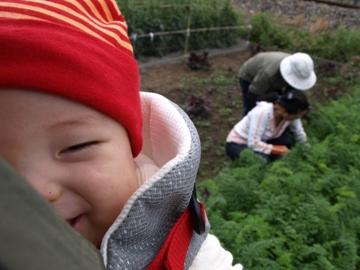 畑のTsubaki