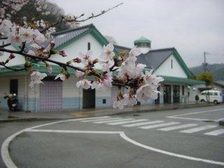 hiroshima-aristonumakuma11.jpg