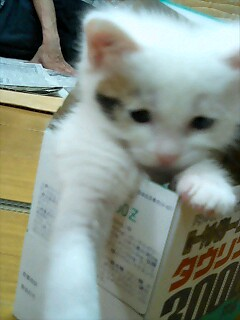 ドリンク猫2