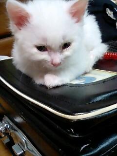 ランドセル猫