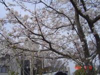 20070haru 022