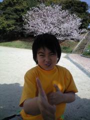 sakuha2.jpg