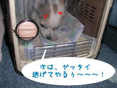 dog 315-1