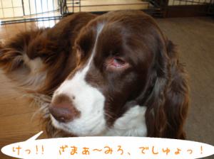 dog 098-1