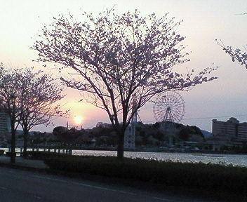 湖と夕日と桜と観覧車