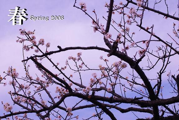 spring2008