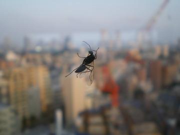 地上12階の窓にとまってた虫