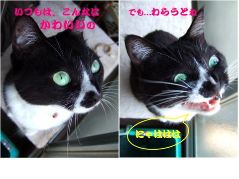 mono_laugh.jpg