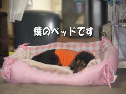 beddoage.jpg