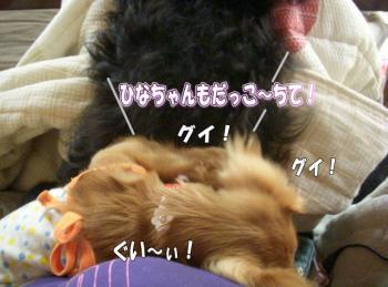 dakoo1image8.jpg