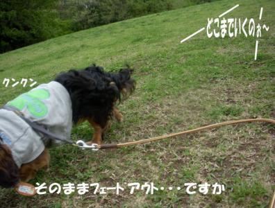 fe-doge2.jpg
