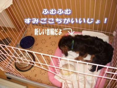kubiwage3.jpg