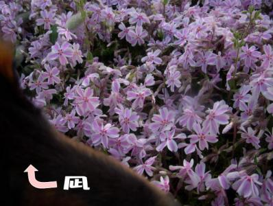 nagiage3.jpg