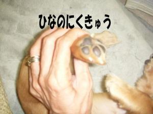 niku1image5.jpg