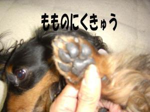 niku3image7.jpg