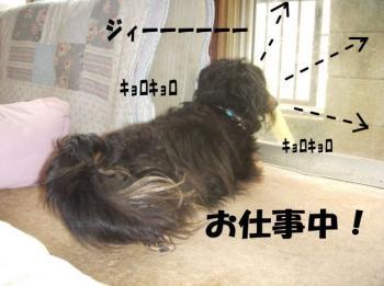 sigotoimage1.jpg