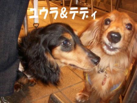 yuuraimage3.jpg