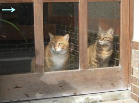 2008玄関の2匹・・・ともう1匹c