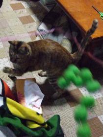 2008_じゃれ猫②空振り0208c
