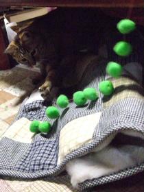2008_じゃれ猫④ちゃぶ台の下から0223cm