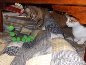 2008_じゃれ猫⑥えーい!0231