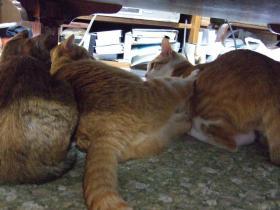 2008_猫キック?0051